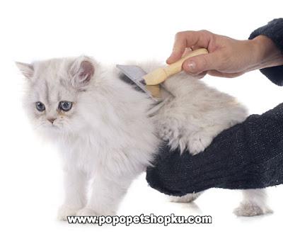 sisir bulu kucing secara rutin