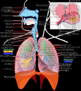 Efek Penyakit Paru Paru