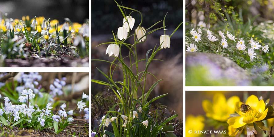 Gartenblog Geniesser-Garten : Blumenzwiebeln für den Fruehling planen