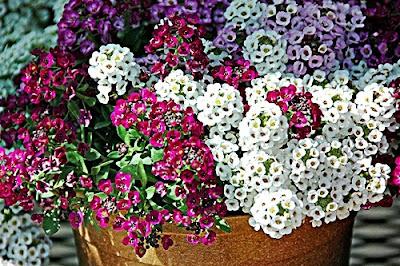 natureza+flores+campo+jardinagem+paisagismo+arranjos.