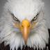 7 Fakta unik burung Elang Flores, hewan pemangsa yang terancam punah dari asal habitatnya