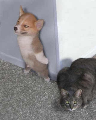 dog hiding from a cat