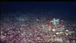 Eksplorasi bawah laut