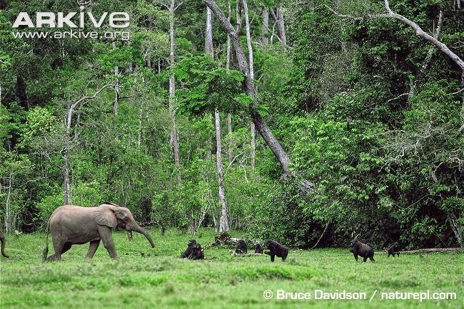 Elephants and gorillas