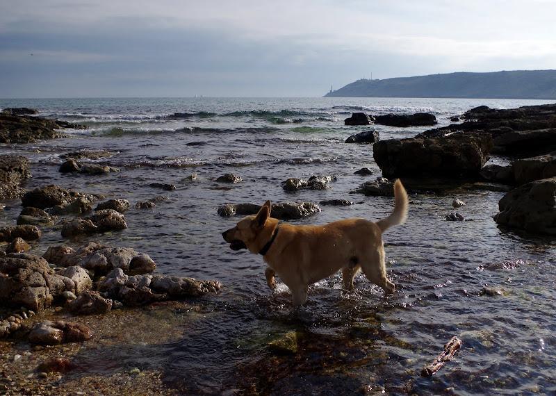Mit Hund am Meer in Apulien: Skilos im Winter