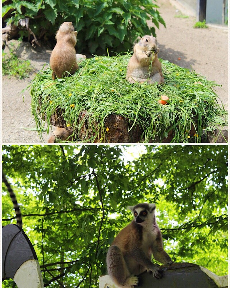 Zoo Hellbrunn