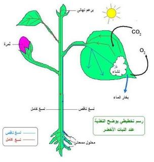 حاجات النباتات الخضراء للنمو