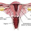 Ciri-ciri Rahim Wanita yang Subur