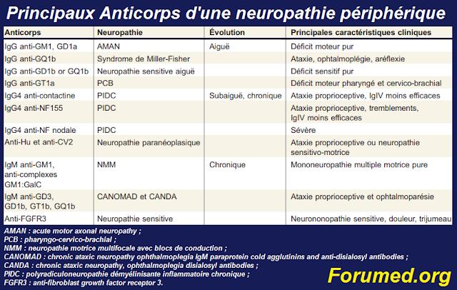 Principaux anticorps recherchés dans le bilan d'une neuropathie périphérique.