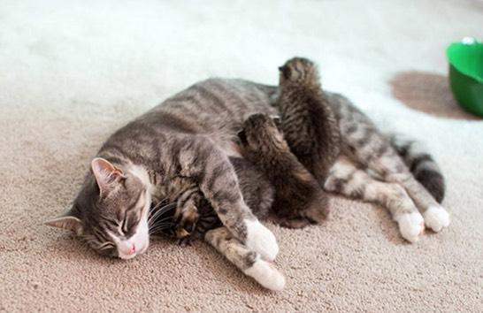 Ramai Hairan Kenapa Kucing Makan Anaknya Sendiri. Ini Sebabnya.