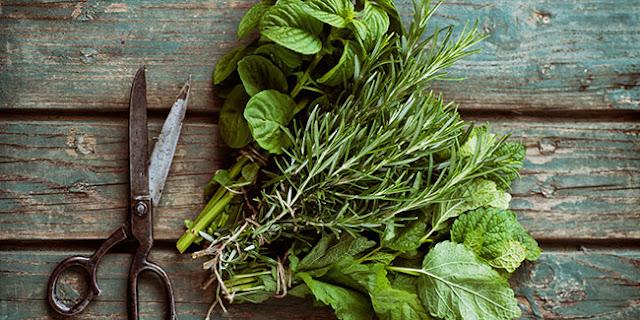 اعشاب لزيادة الوزن