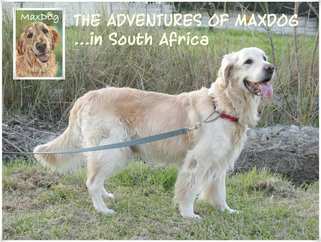 The Adventures of Maxdog in South Africa