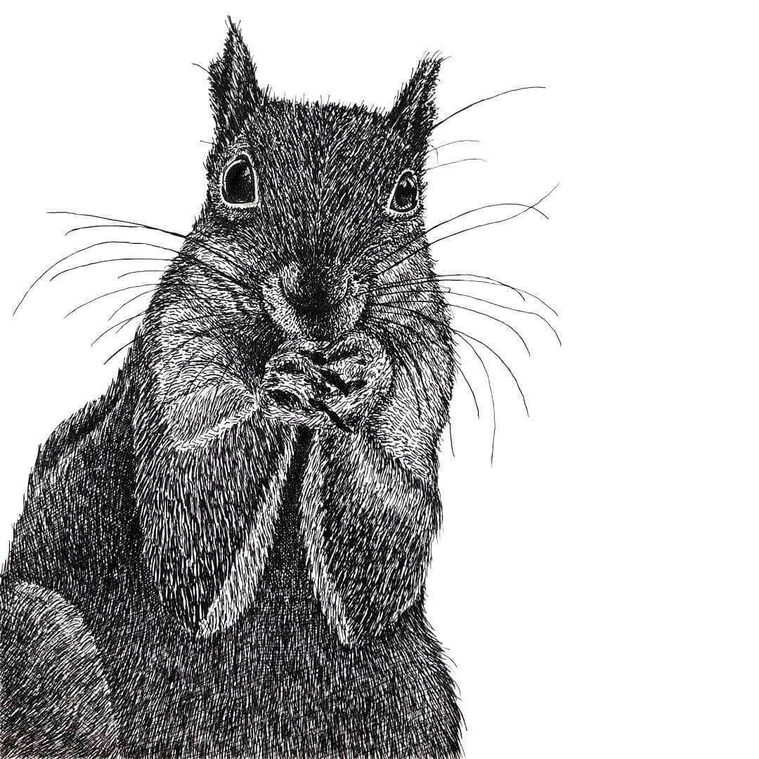 06-Squirrel-Gaspar-Animal-Stippling-and-Cross-Hatching-B&W-Drawings-www-designstack-co