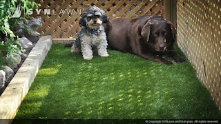 installation technique and maintenance schedule individualized for your dogs artificial grass work with you to determine