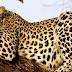 Tansa Wildlife Sanctuary, Thane