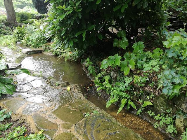 Water Garden, ogród w cieniu, strumień i kamienna ścieżka
