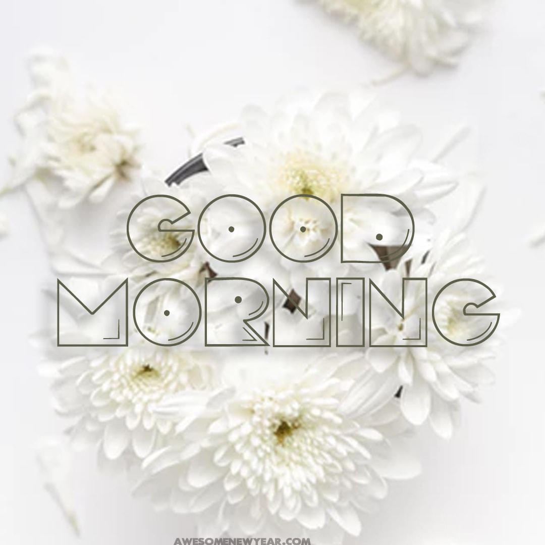Good morning saying with images of flowers download