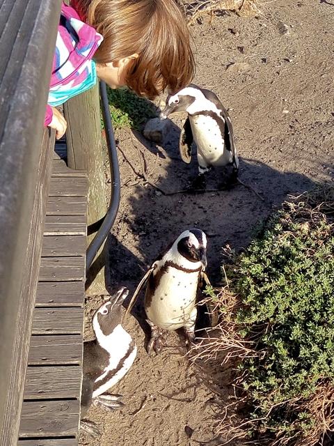 Helia intercambiando impresiones con los pingüinos
