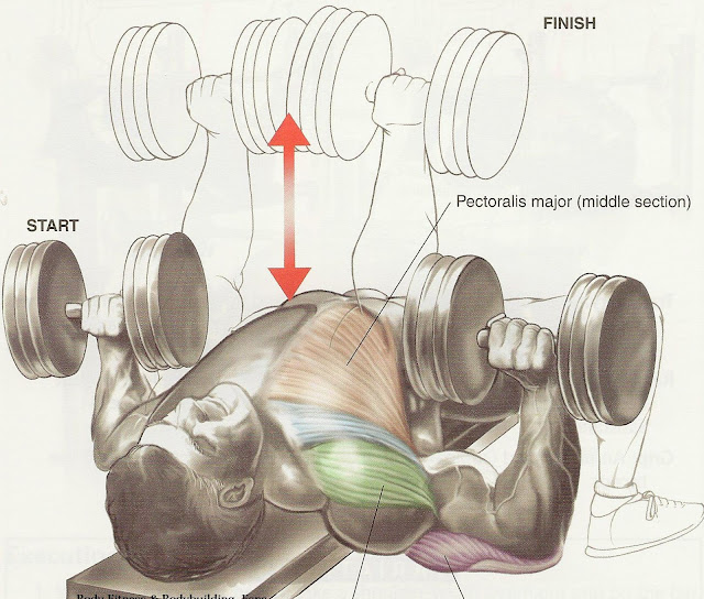 bodybuilding chest training