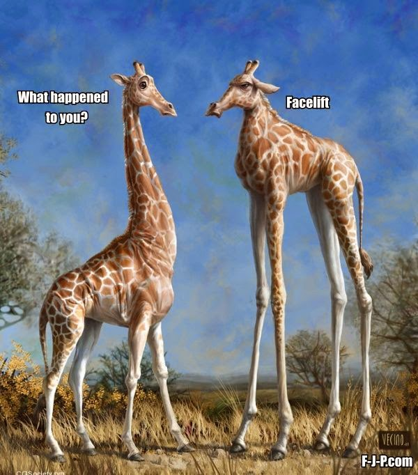 Funny Giraffe Cosmetic Surgery Fail Joke Picture