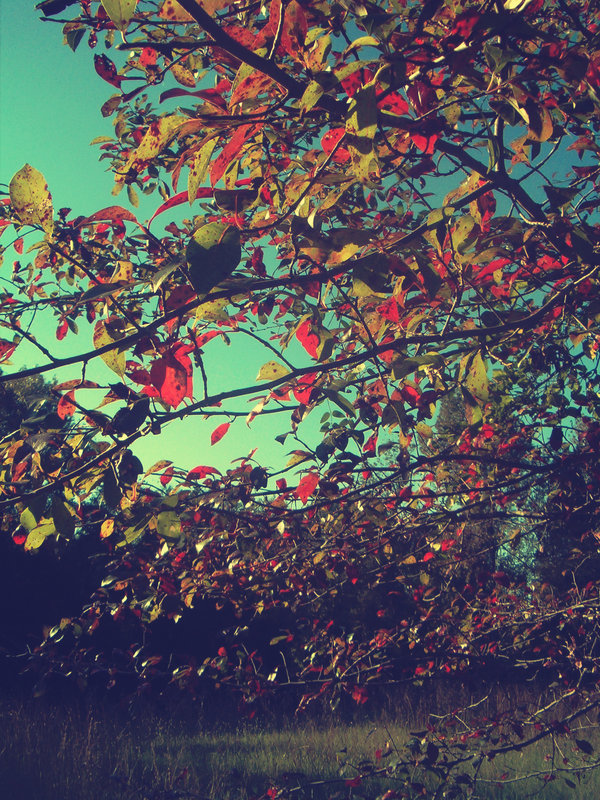 vintage fall backgrounds with - photo #22