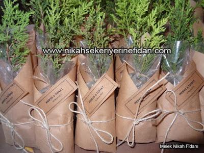 Antalya Nikah Çamı Fidanı - Merve Tunay - 1