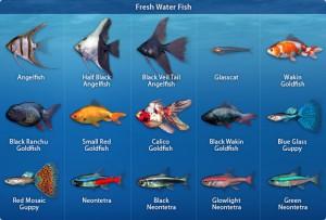 Pescitropicali pesci d 39 acqua dolce for Pesce pulitore acqua dolce