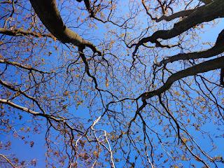 Permalink ke Macam – Macam Jaringan Pada Tumbuhan