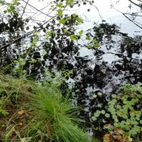 L'ànima enigmàtica del llac (Liudmila Liutsko)