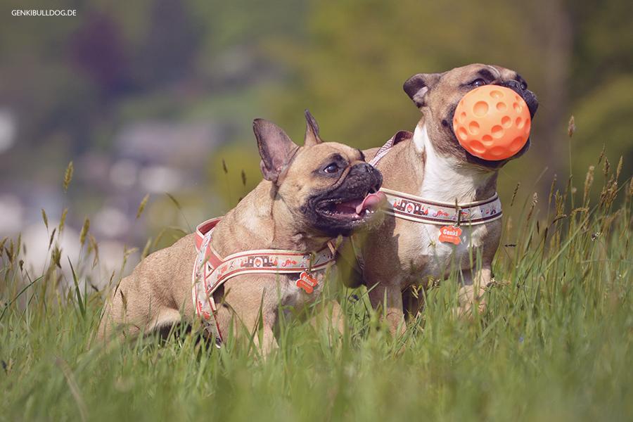 Hundeblog Genki Bulldog - Ausflug zum Dilsberg