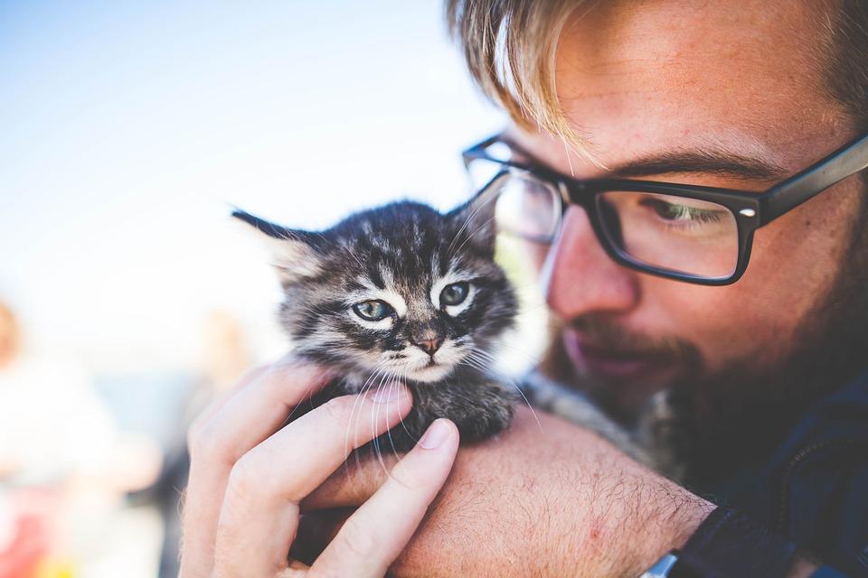 Image result for mèo và người