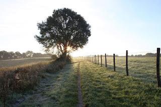 Ein Baumsteht an einem Feldweg. Dahinter geht die Sonne auf. Die ganze Landschaft ist von Raureif und Eis bedeckt.