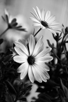 Reto 52 semanas - semana 40 - Blanco y negro colorido