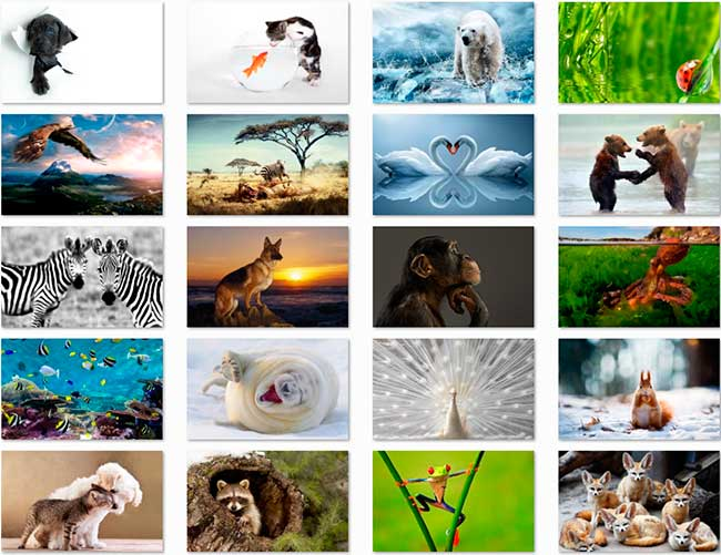 100 Animal HD Papéis de Parede Preview 02 por Saltaalavista Blog