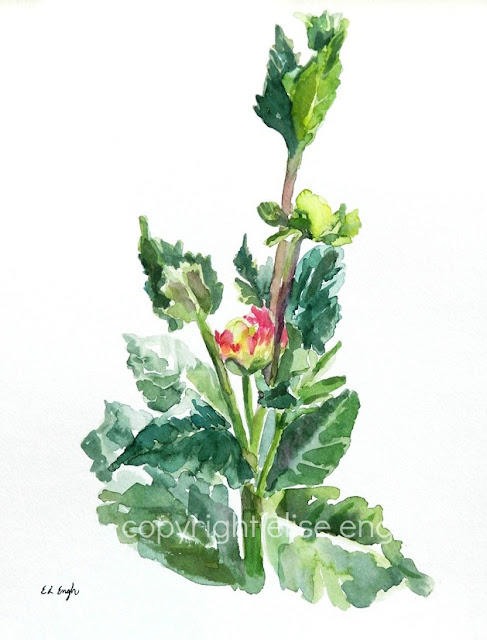 flower buds watercolor painting