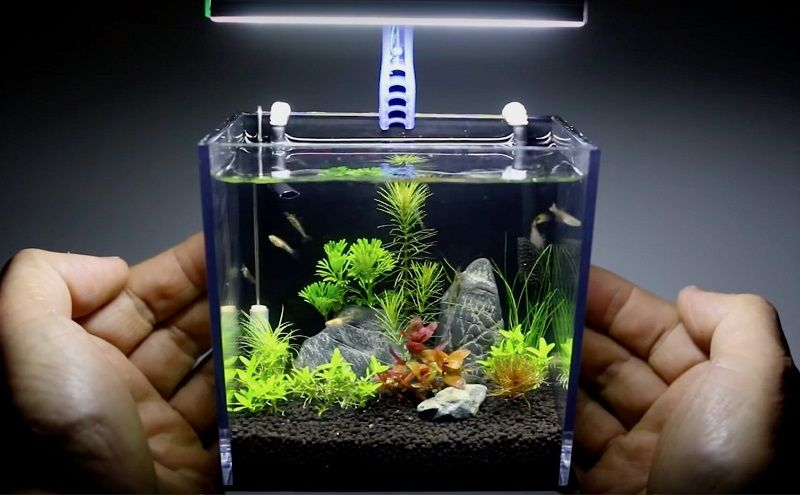 Image Key Pieces of Betta Fish Bowl Ideas