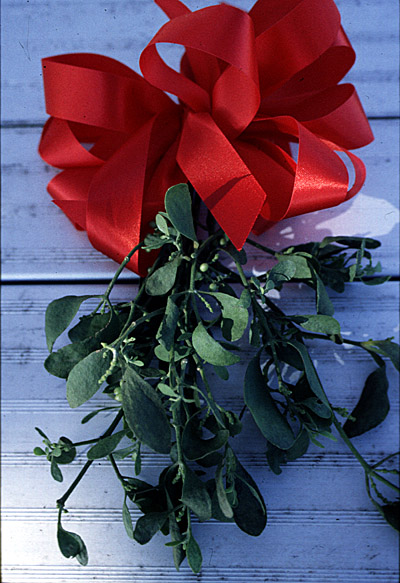Air Quality Online By Allerair Study Could Mistletoe Be The Kiss Of Death For Colon Cancer