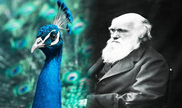 نظرية التطور لداروين