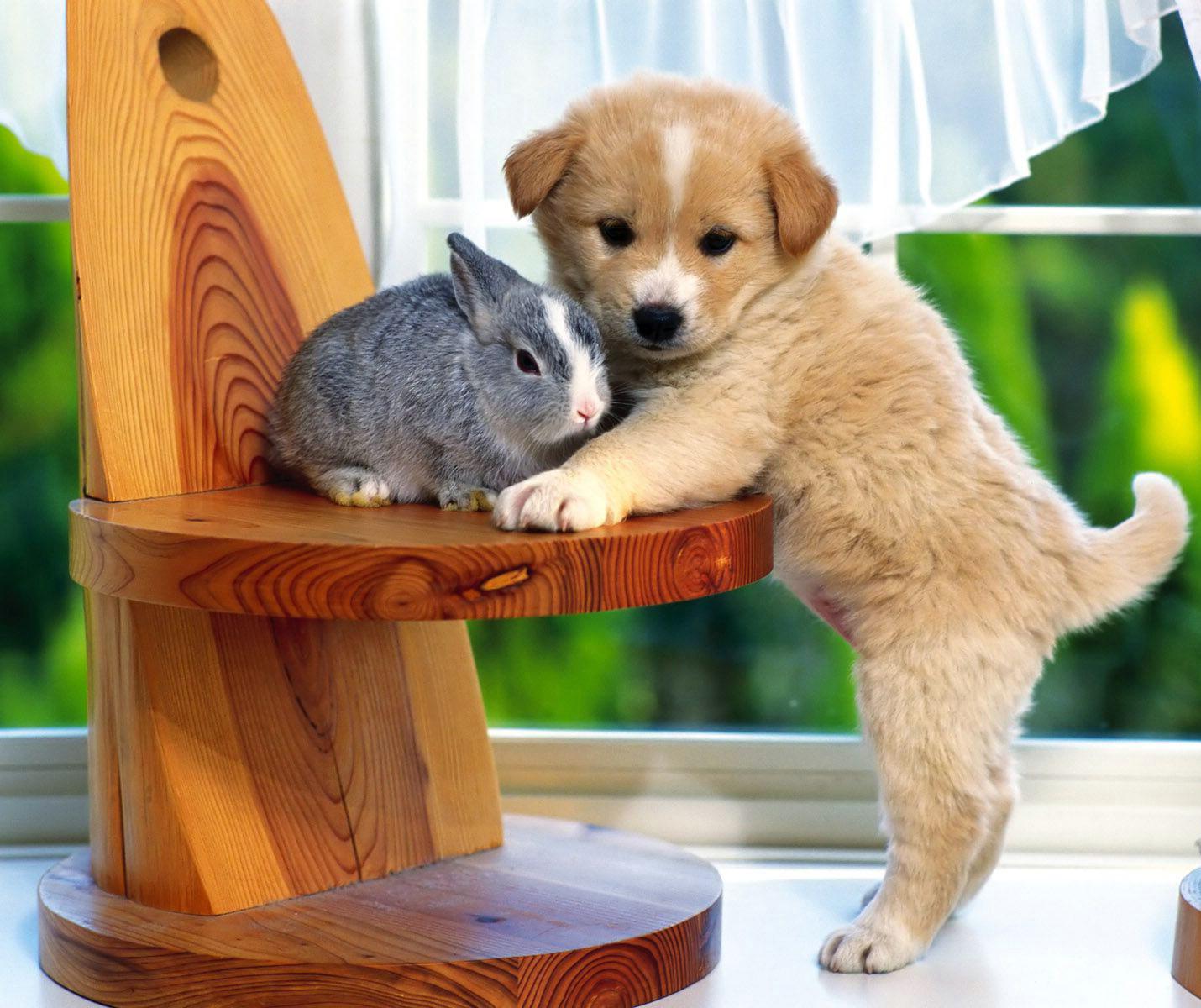 PET ANIMALS PHOTOS: PET ANIMALS PHOTOS