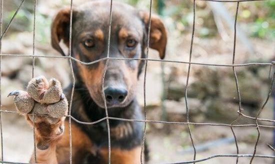 Invadir casas para resgatar animais