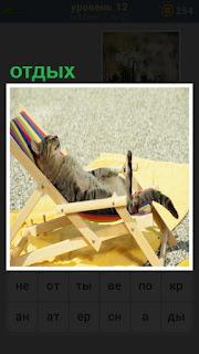 под солнцем в очках в шезлонге отдыхает кошка