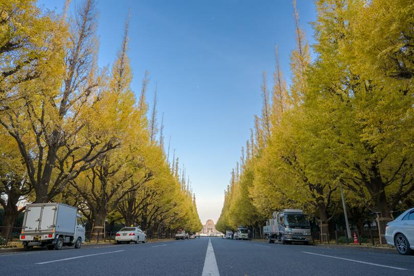 The street along which the 300-meter alley of ginkgo runs is called Icho Namiki