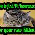 The most effective method to Find Pet Insurance for Your New Kitten