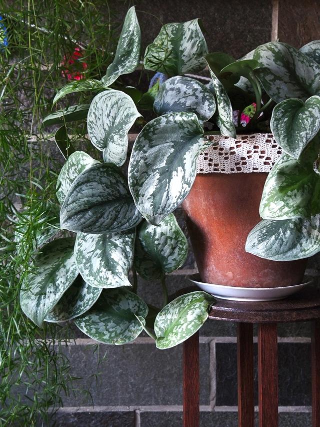 plantenliefde ....