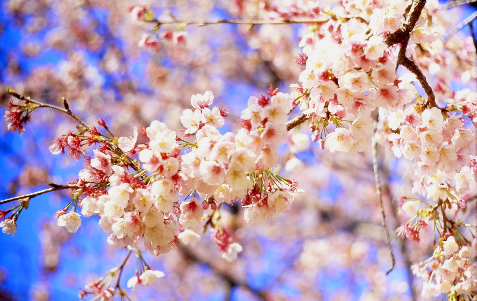 Весна фото, надписью