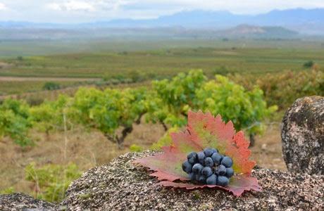 Rioja, viñedos y bodegas, Denominación de Origen Calificada