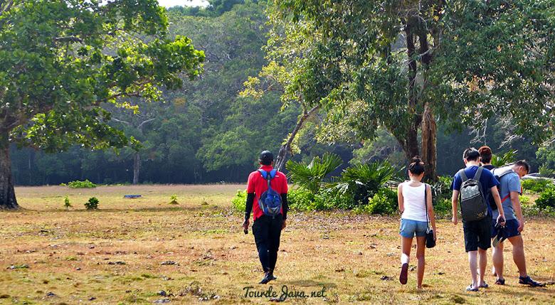safari satwa di savana cidaon ujung kulon