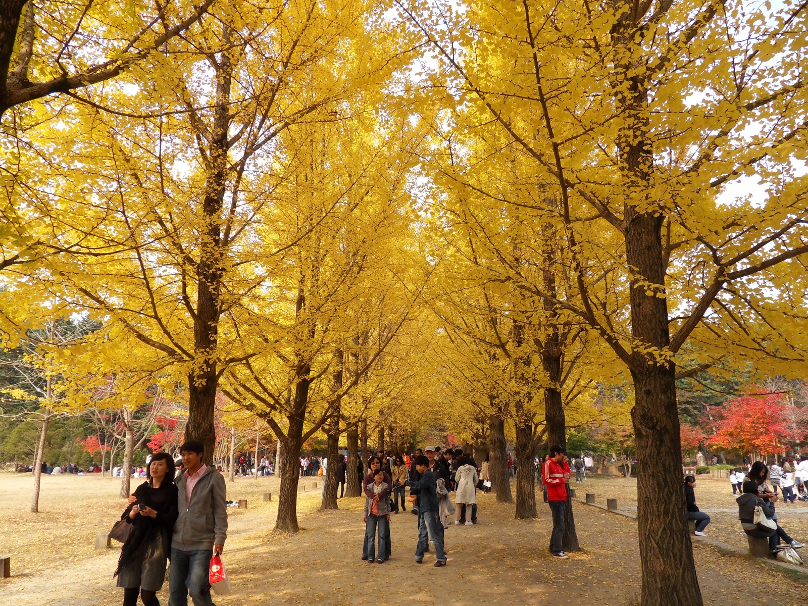 Country Fall Wallpaper Top World Travel Destinations Nami Island Korea