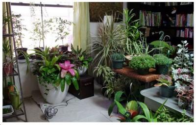 Plantas ornamentales de interior - Plantas decorativas de interior ...