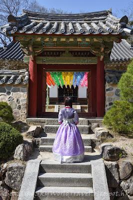 慶州佛國寺櫻花